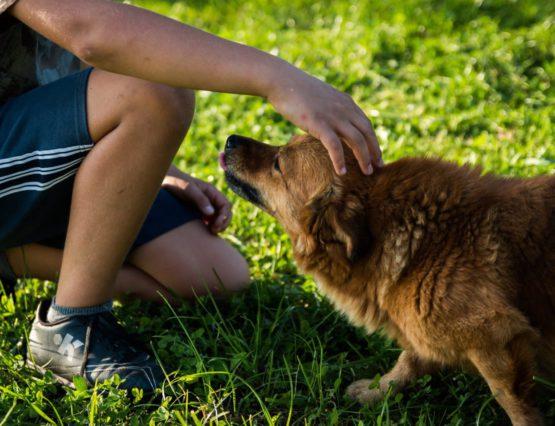 Io e il cane