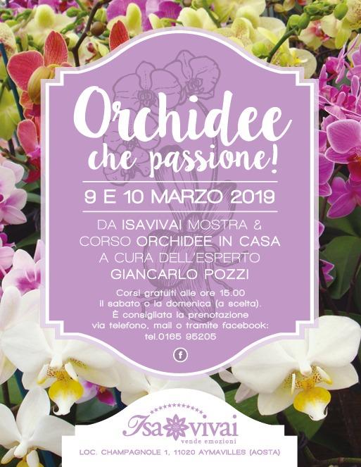Orchidee che passione