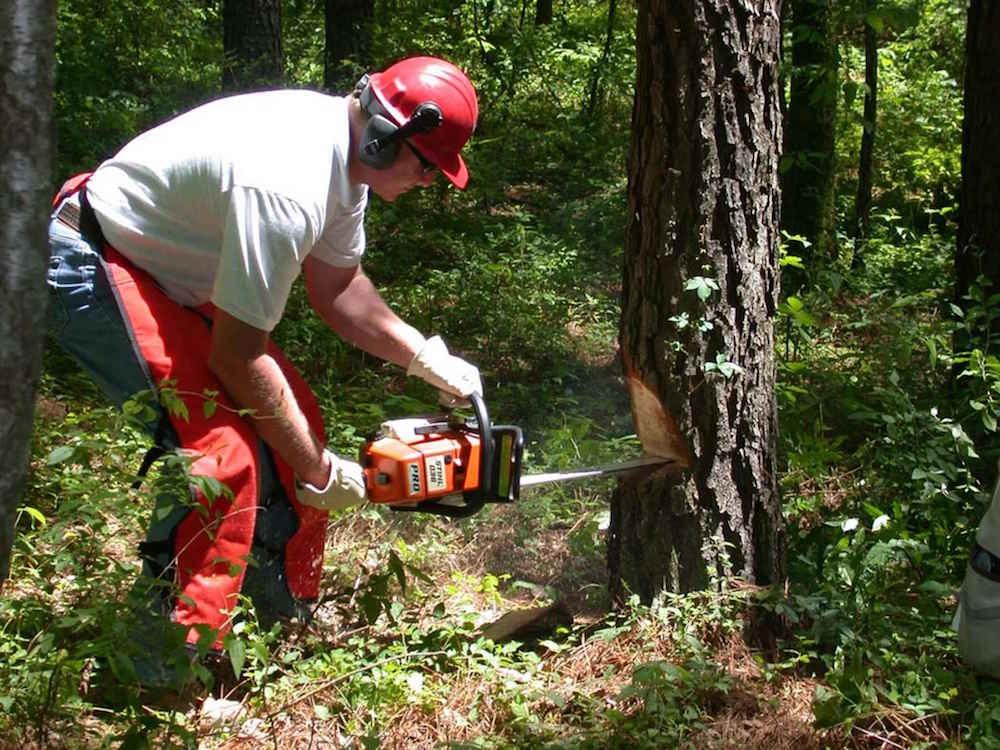 Taglio alberi con motosega