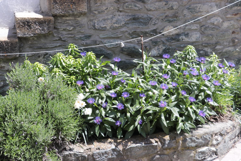 Au Jardin Fleury