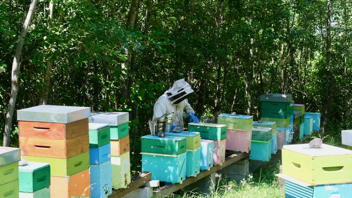Alessandro Anserme apicoltore