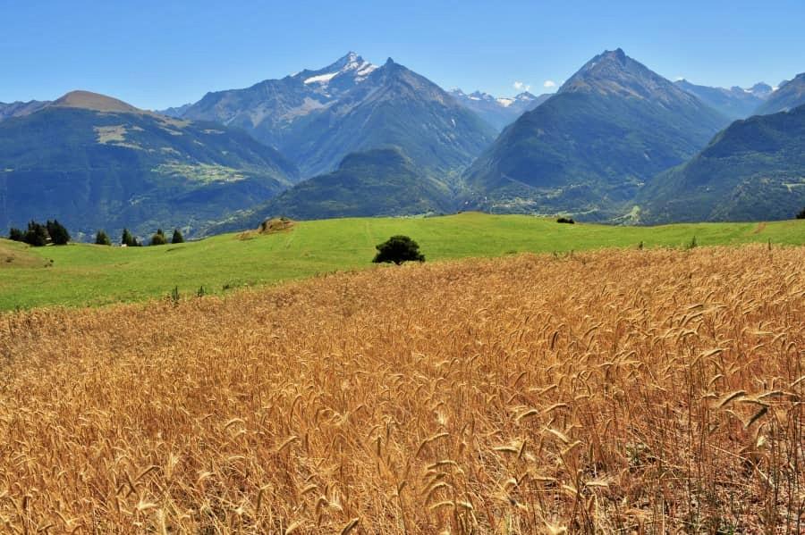 Cereali La Biopanetteria