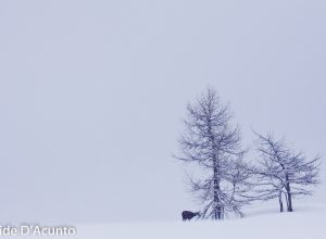 Mont Avic - foto Davide D'Acunto