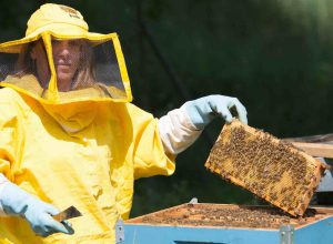 api apicoltura miele