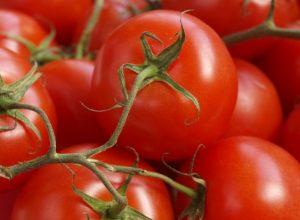 tomatoes-3563469_960_720-730x467